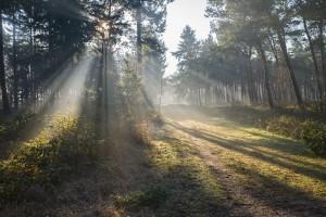 light-in-trees_breath
